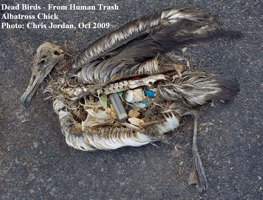 Dead Birds - from Human Trash